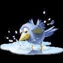 twitter_ptak_ve_vode